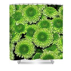 Chrysanthemum Green Button Pompon Kermit Shower Curtain by Kaye Menner