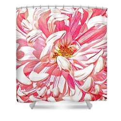Chrysanthemum In Pink Shower Curtain