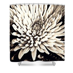 Shower Curtain featuring the photograph Chrysanthemum In Sepia 2  by Sarah Loft
