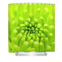 Chrysanthemum Macro Shower Curtain