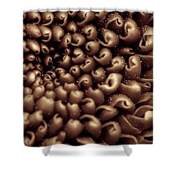 Chrysanthemum Sepia Shower Curtain