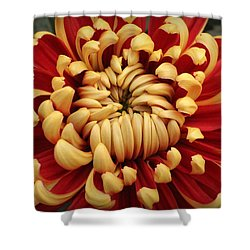 Chrysanthemum In Full Bloom Shower Curtain