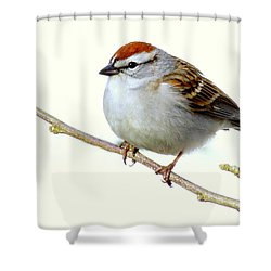 Chubby Sparrow Shower Curtain