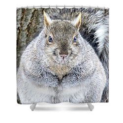 Chubby Squirrel Shower Curtain by Brook Burling