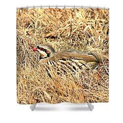 Shower Curtain featuring the photograph Chuckar Bird Hiding In Grass by Sheila Brown
