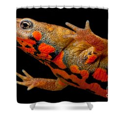 Chuxiong Fire Belly Newt Shower Curtain by Dant� Fenolio