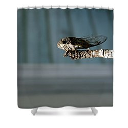 Cicada Shower Curtain by Cathy Harper