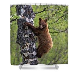 Cinnamon Climb Shower Curtain