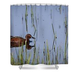 Cinnamon Teal Adult Male Shower Curtain