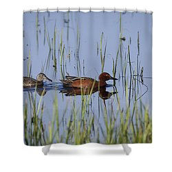 Cinnamon Teal Pair Shower Curtain