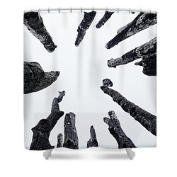 Circle Of Trees Shower Curtain by Karen Stahlros