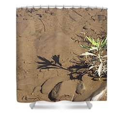 Shower Curtain featuring the photograph Circle Shadow Plant by Marie Neder