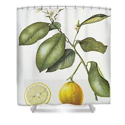 Citrus Bergamot Shower Curtain