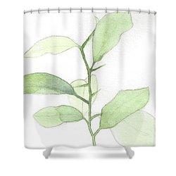 Citrus Sapling Shower Curtain