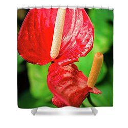 City Garden Flowers Shower Curtain