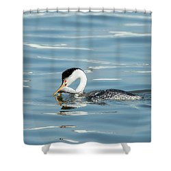 Shower Curtain featuring the photograph Clarks Grebe by Everet Regal