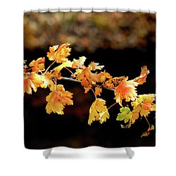 Classic Colors Shower Curtain