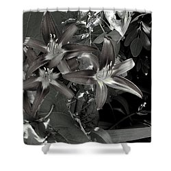 Classic Daylily Shower Curtain