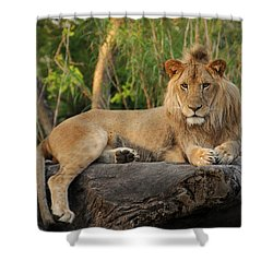 Classic Young Male Shower Curtain