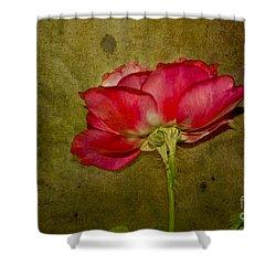Classy Beauty Shower Curtain by Claudia Ellis
