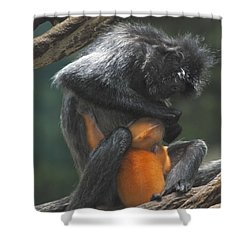 Shower Curtain featuring the photograph Cleaning Baby by Richard Bryce and Family
