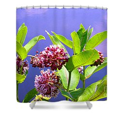 Clear Simple Beauty Shower Curtain