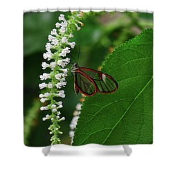Clearwing Butterfly Shower Curtain by Ronda Ryan