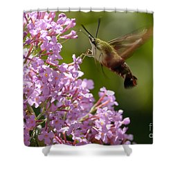 Clearwing Pink Shower Curtain