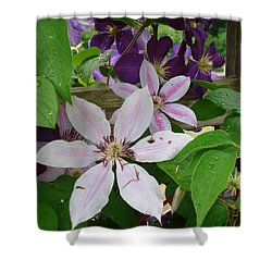 Clematis-ii Shower Curtain