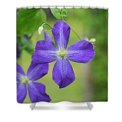 Clematis Jenny Shower Curtain