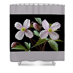 Shower Curtain featuring the photograph Clematis Montana Rubens by Terence Davis