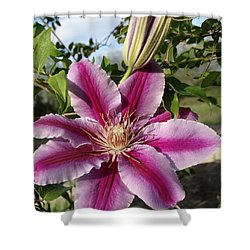 Shower Curtain featuring the photograph Clematis Petals by Rebecca Overton