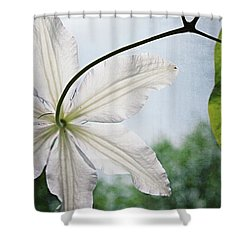 Shower Curtain featuring the photograph Clematis Vine And Leaves by Michelle Calkins