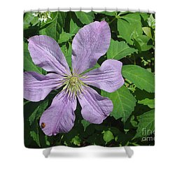 Clematis With Lady Bug Shower Curtain