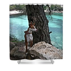 Cleopatra In A Turquoise Paradise Shower Curtain by Pedro Cardona Llambias
