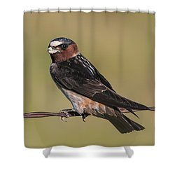 Shower Curtain featuring the photograph Cliff Swallow by Gary Lengyel