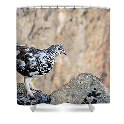 Cliffside Ptarmigan Shower Curtain