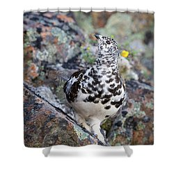 Cliffside Showoff Shower Curtain