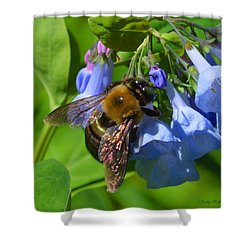 Cling On Shower Curtain by Kathy Kelly