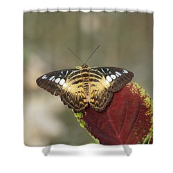Shower Curtain featuring the photograph Clipper Butterfly by Paul Gulliver