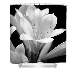 Clivia Flowers Black And White Shower Curtain
