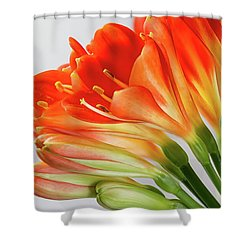 Clivia Miniata 2 Shower Curtain by Shirley Mitchell