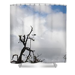 Shower Curtain featuring the photograph Close Call by Marie Neder