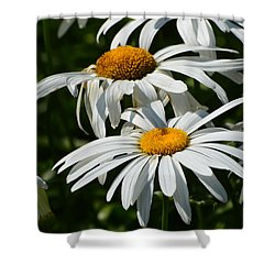 Shower Curtain featuring the photograph Close To The Daisies  by Lyle Crump