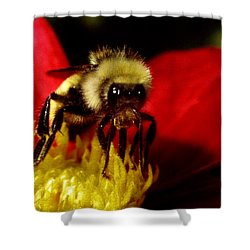 Close Up Bee Shower Curtain
