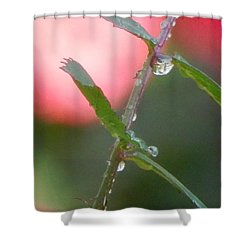 Shower Curtain featuring the photograph Close Up by Betty-Anne McDonald