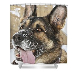 Close-up Of A Military Working Dog Shower Curtain by Stocktrek Images