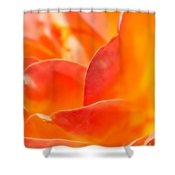 Close-up Of An Orange Rose Flower Shower Curtain