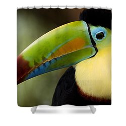 Close-up Of Keel-billed Toucan Shower Curtain
