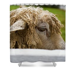Close-up Of Leicester Longwool Shower Curtain